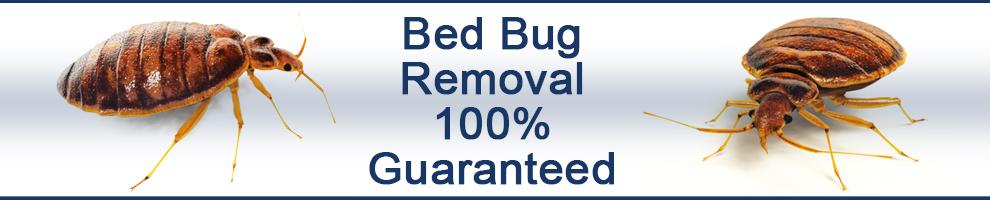 bed_bug2